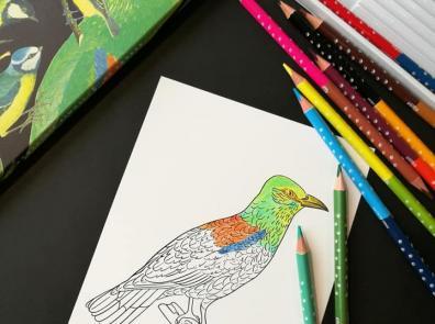 """Krāsainie zīmuļi un izkrāsojamās kartītes """"Putni"""""""